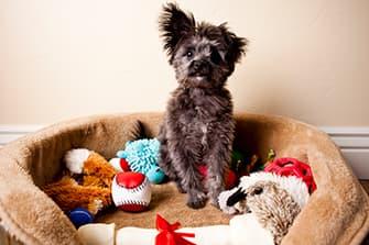 Hund im Körbchen mit Spielzeug