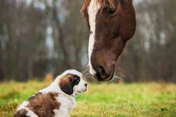 Welpe mit dem Pferd